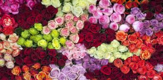 Hidden Messages Behind The Different Colors Of Valentine Roses -likelovequotes